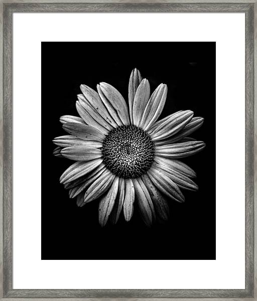 Backyard Flowers In Black And White 13 Framed Print