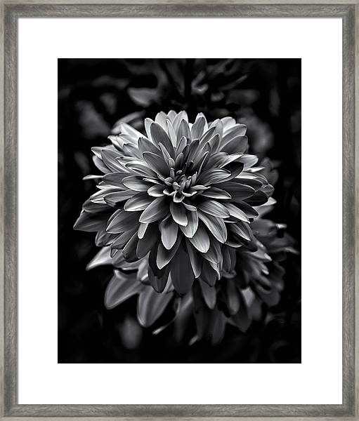 Backyard Flowers In Black And White 15 Framed Print