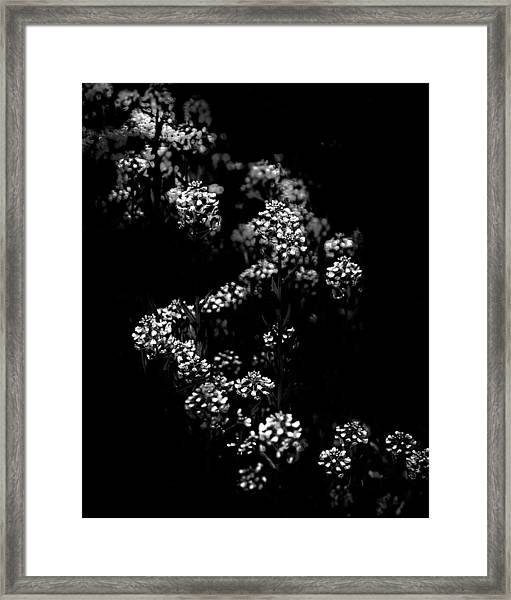 Backyard Flowers In Black And White 33 Framed Print