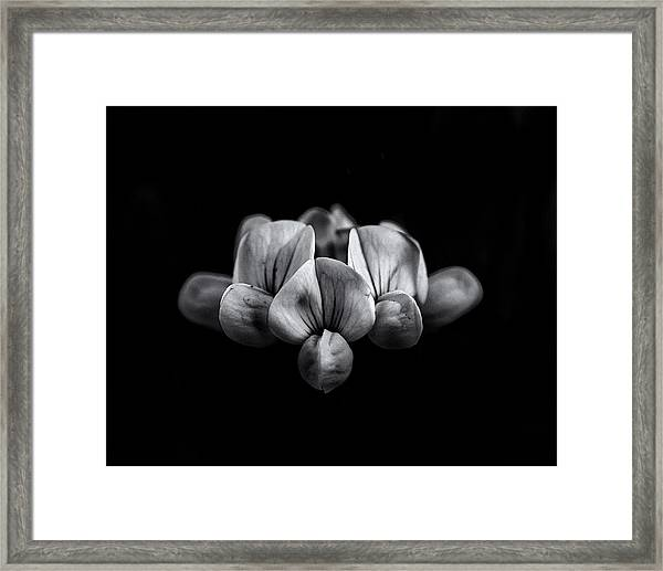 Backyard Flowers In Black And White 5 Framed Print
