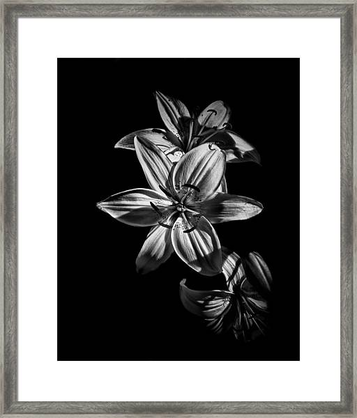 Backyard Flowers In Black And White 9 Framed Print