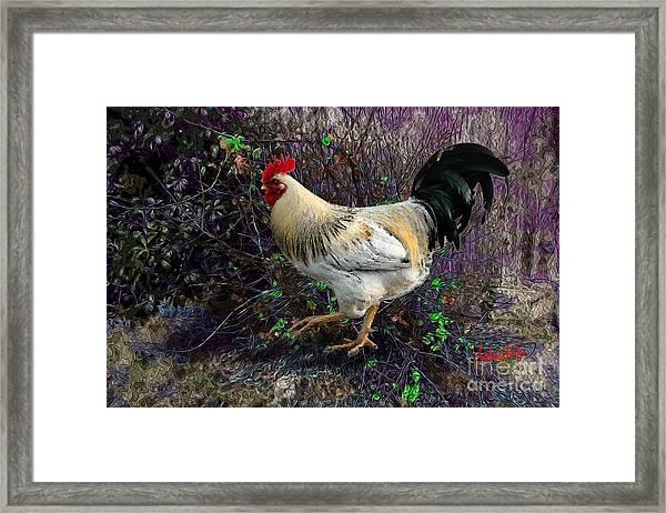 Backyard Rooster Framed Print