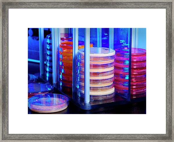 Bacteria Research Framed Print