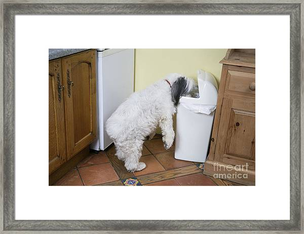 Bad Doggy Behavior Framed Print
