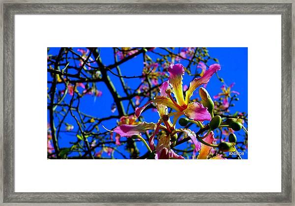 Bad Orchid  Framed Print