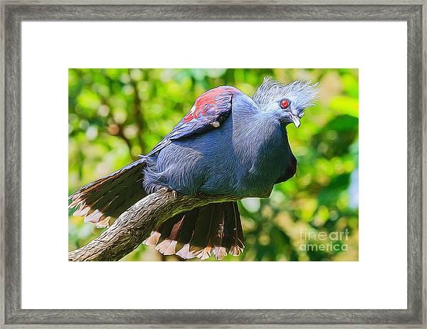 Balanced Pigeon Framed Print