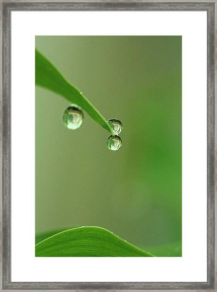 Balancing Act Framed Print by Rebeka Dove
