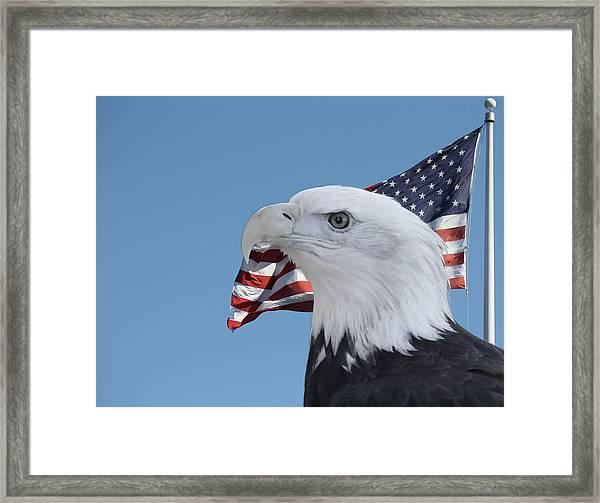 Bald Eagle And Flag Framed Print