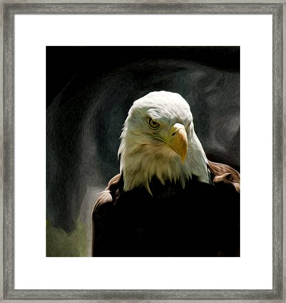 Bald Eagle Giving You That Eye Framed Print