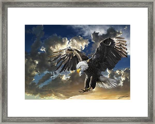 Bald Eagle Haliaeetus Leucocephalus Framed Print by Owen Bell