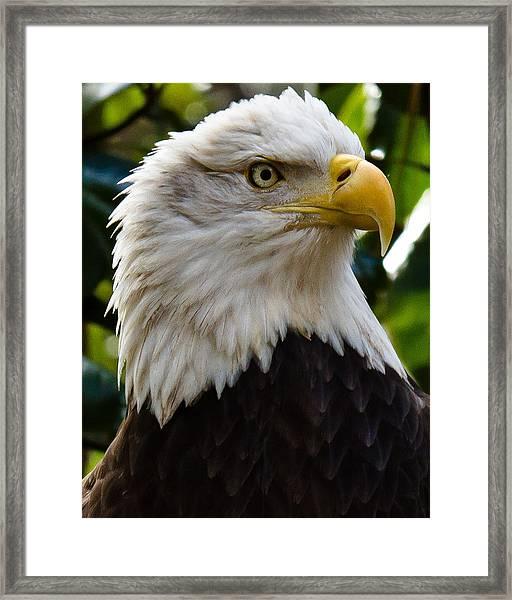 Bald Is Beautiful Framed Print
