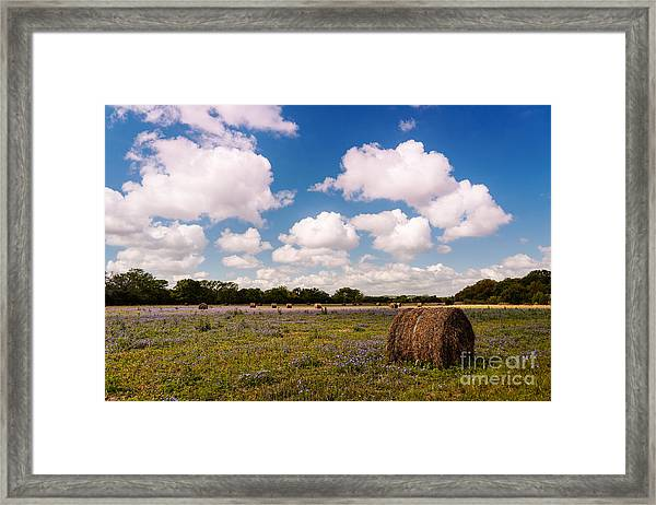 Bales Of Hale - Quintessential Texas Hill Country - Luckenback Framed Print