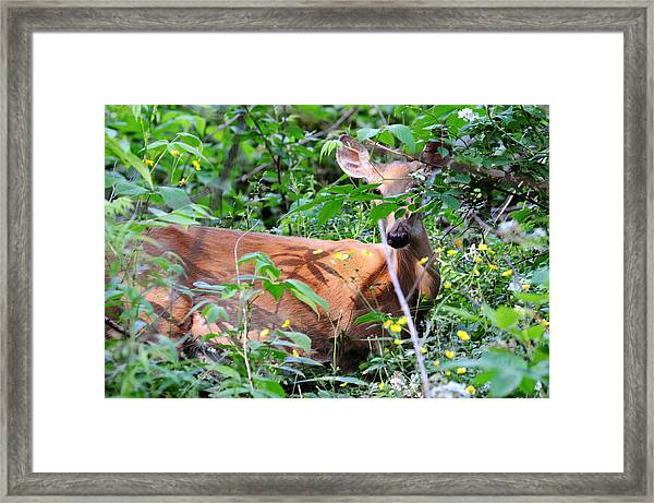 Framed Print featuring the photograph Bambi by David Armstrong