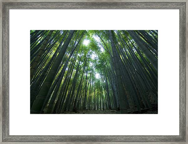 Bamboo Forest Framed Print by Aaron Bedell