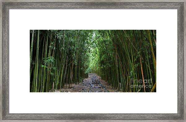 Bamboo Forest Trail Hana Maui Framed Print