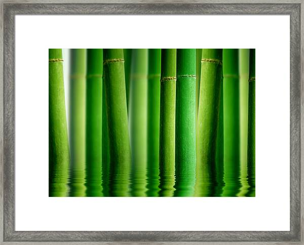 Bamboo Forest With Water Reflection Framed Print