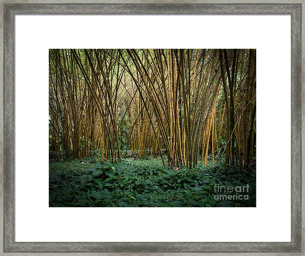Bamboo Grove Framed Print