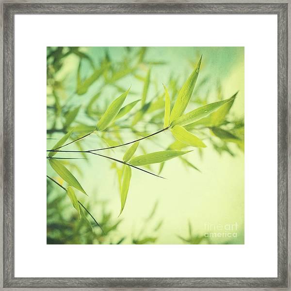 Bamboo In The Sun Framed Print