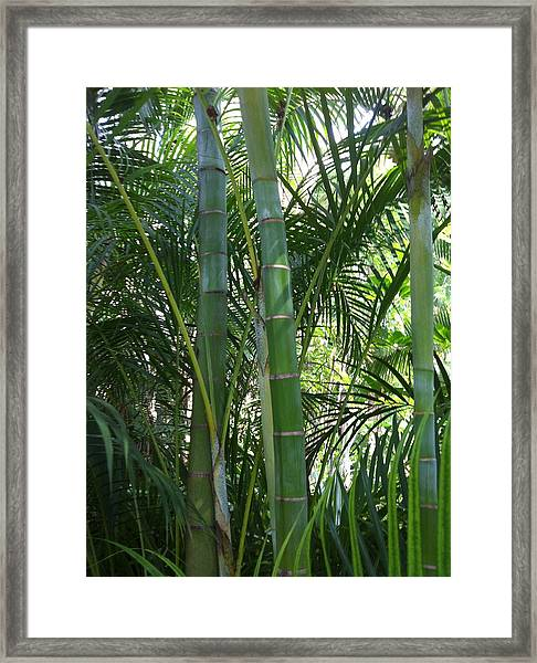 Bamboo Lookout Framed Print
