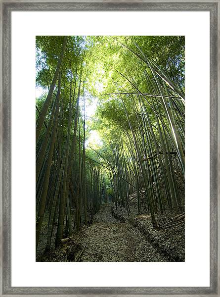 Bamboo Road Framed Print by Aaron Bedell