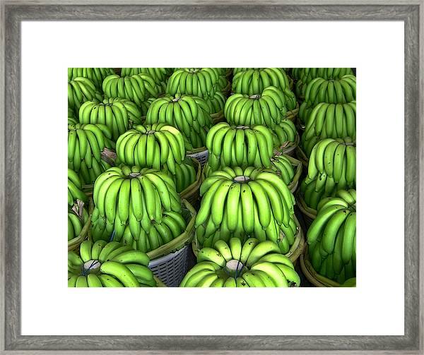 Banana Bunch Gathering Framed Print