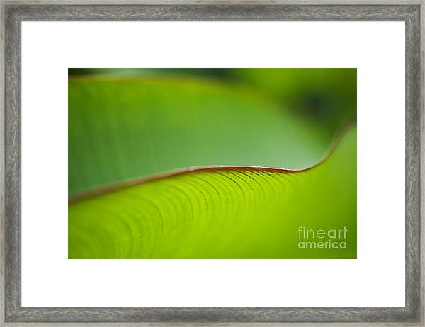 Banana Leaf Macro Framed Print