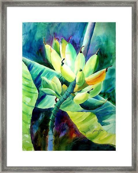 Bananas 6-12-06 Julianne Felton Framed Print