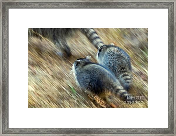 Bandits On The Run Framed Print