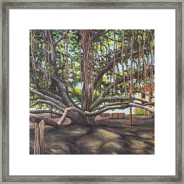 Banyan Tree Lahaina Maui Framed Print