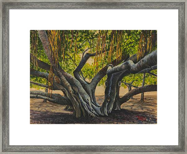 Banyan Tree Maui Framed Print