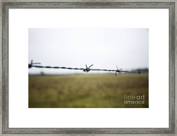 Barbed Wires Framed Print by Mina Isaac