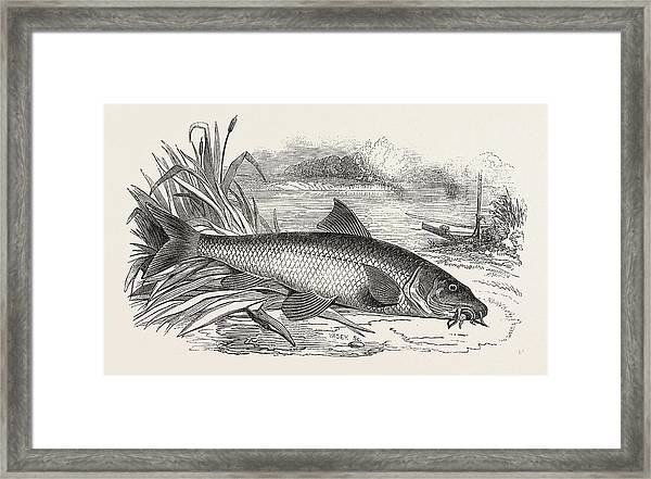 Barbel Framed Print