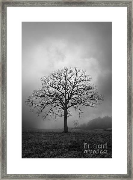 Bare Tree And Clouds Bw Framed Print