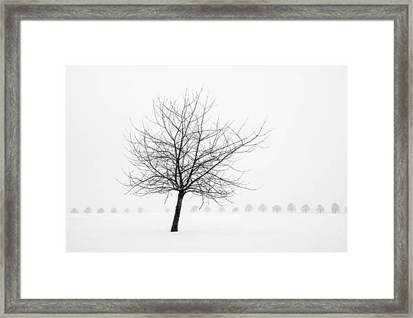 Bare Tree In Winter - Wonderful Black And White Snow Scenery Framed Print
