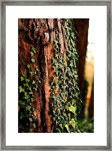 Bark And Ivy Framed Print