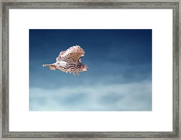 Barking Owl In Flight Framed Print