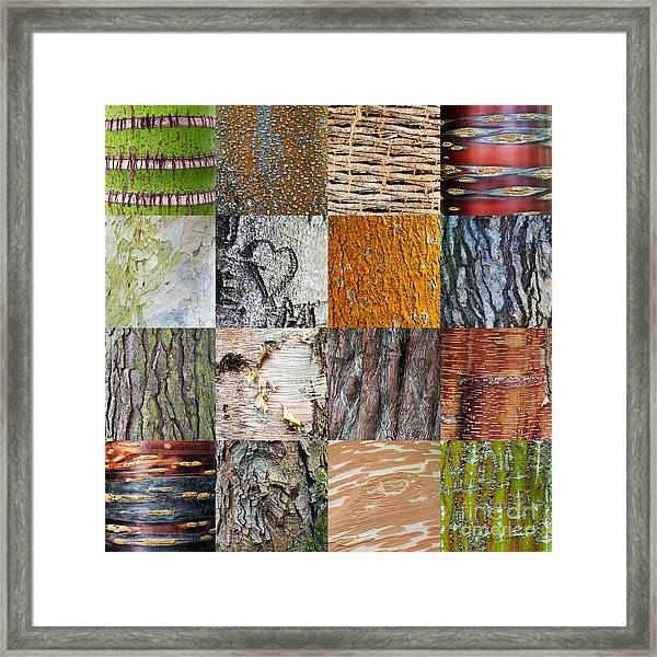 Barking Up The Right Tree Framed Print