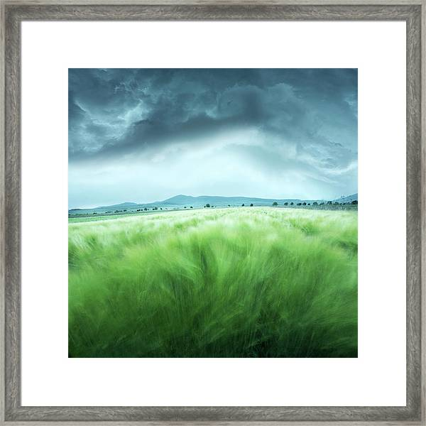 Barley Field Framed Print by Floriana Barbu