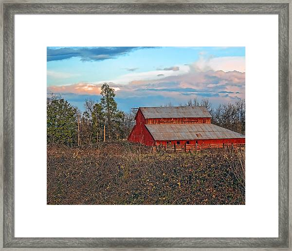 Barn In The Berry Bushes Framed Print
