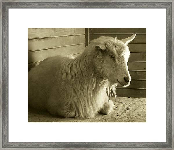 Barn Life Framed Print