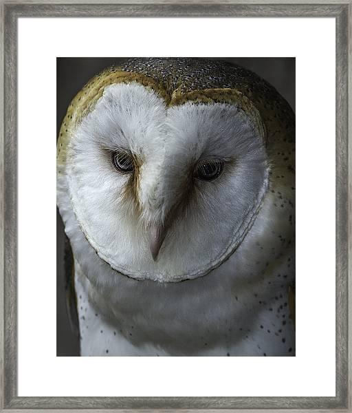 Barn Owl 2014-001 Framed Print