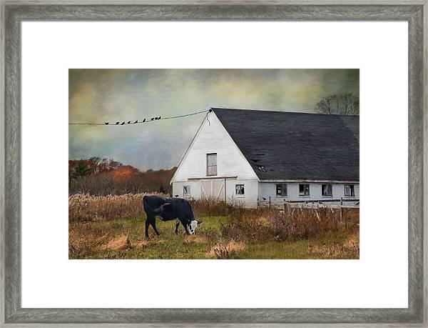 Barnyard Bliss Framed Print
