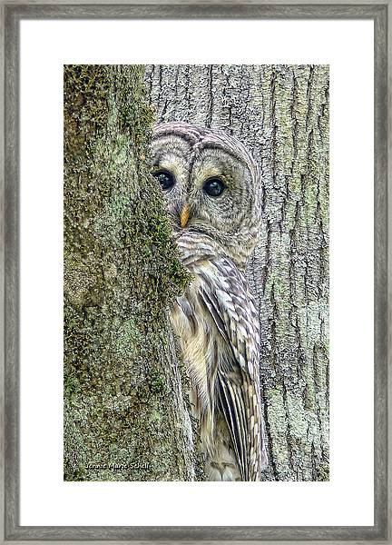Barred Owl Peek A Boo Framed Print