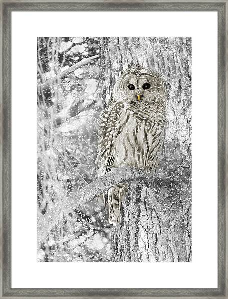 Barred Owl Snowy Day In The Forest Framed Print