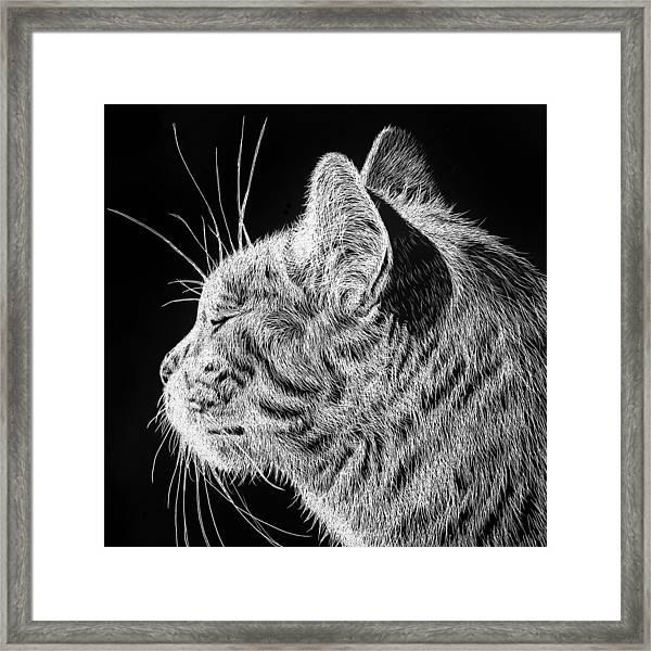 Basking II Framed Print