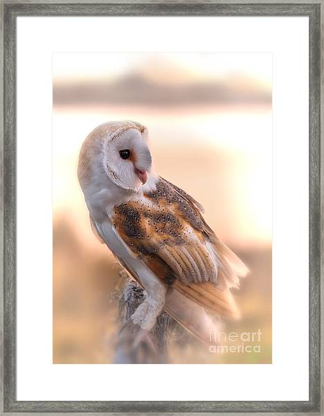 Basking In The Morning Sun Framed Print