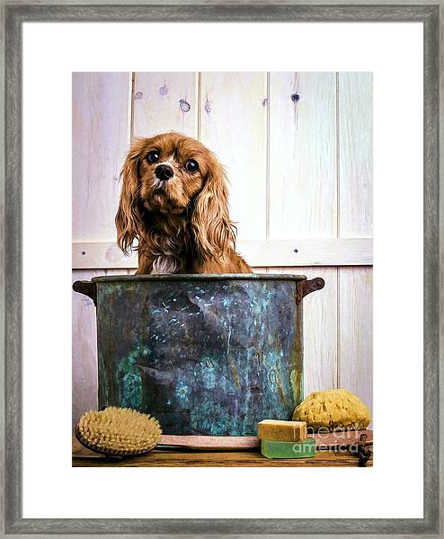 Bath Time - King Charles Spaniel Framed Print