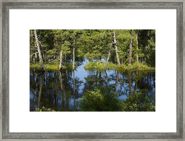 Batsto River Framed Print