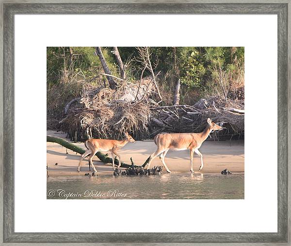 Beach Baby Framed Print