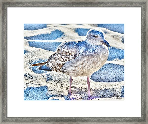 Beach Bird Framed Print